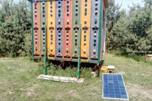 Solar panels to help beekeepers: monitoring and power supply of remote objects